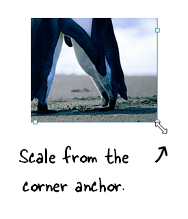 Articulate Rapid E-Learning Blog - scale images using the corner anchors in PowerPoint or Storyline